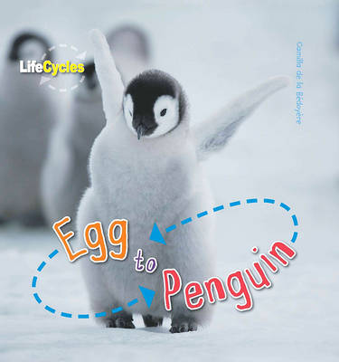 Life Cycles: Egg to Penguin (Paperback)