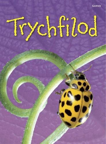 Cyfres Dechrau Da: Trychfilod (Hardback)