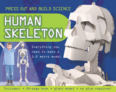 Press Out and Build Human Skeleton