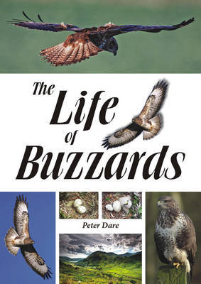 The Life of Buzzards (Paperback)