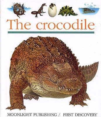 Crocodile - First Discovery Series (Hardback)