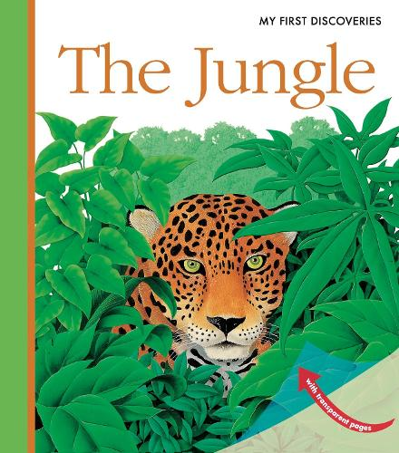 The Jungle - My First Discoveries (Spiral bound)