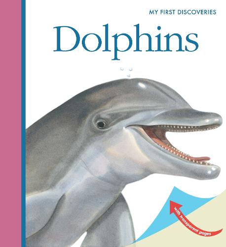 Dolphins - My First Discoveries (Spiral bound)