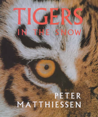 Tigers in the Snow (Hardback)