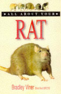 All About Your Rat - All about your.... (Paperback)