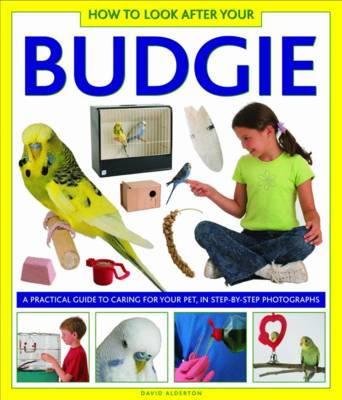 How to Look After Your Budgie (Hardback)