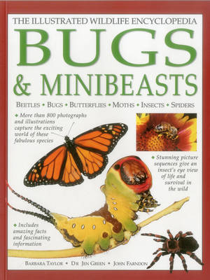 Illustrated Wildlife Encyclopedia: Bugs & Minibeasts (Hardback)