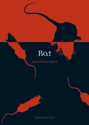 Rat - Animal Series (Paperback)