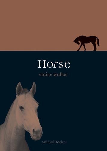 Horse - Animal Series (Paperback)