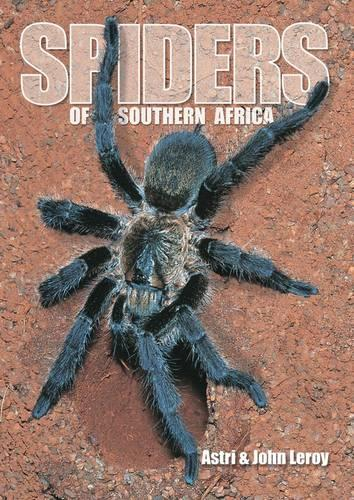 Spiders of Southern Africa (Paperback)