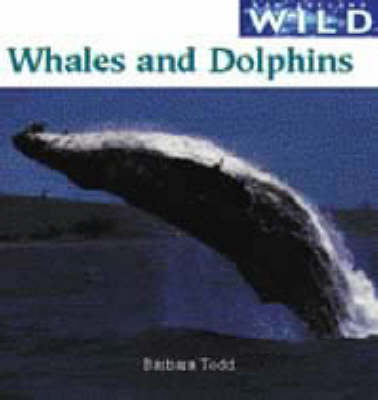 Whales and Dolphins - New Zealand wild (Paperback)