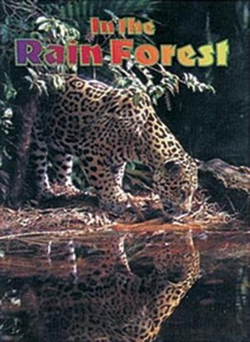 In the Rain Forest: Leopard - Wildcats (Paperback)