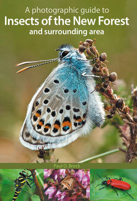 A Photographic Guide to Insects of the New Forest and Surrounding Area (Paperback)