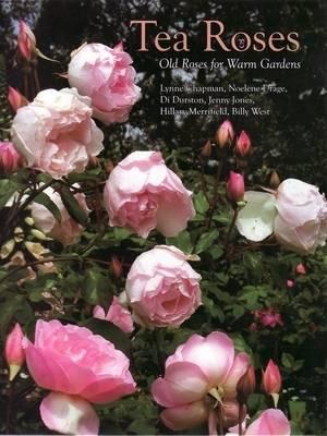 Tea Roses: Old Roses for Warm Gardens (Hardback)