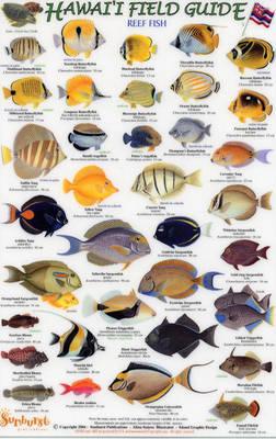 Reef Fish: Small Fish v. 1 - Hawaii Field Guides S.