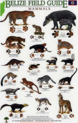 Mammals/tracks - Belize Field Guides S.