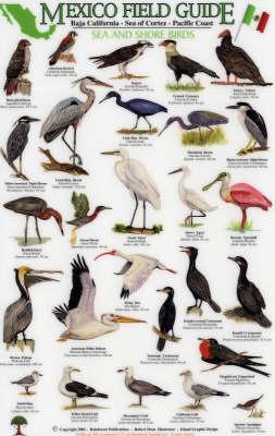Sea and Shore Birds: Baja California - Sea of Cortez - Pacific Coast - Mexico Field Guides S.