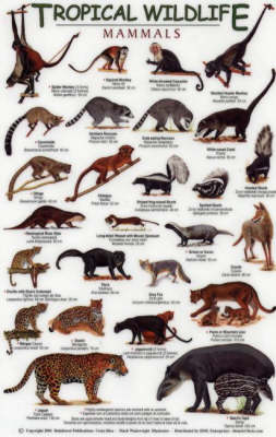 Mammals - Tropical Wildlife Field Guide S.