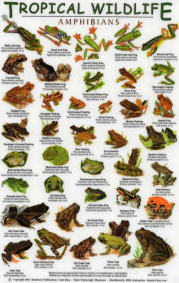 Amphibians - Tropical Wildlife Field Guide S.