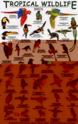 Birds - Tropical Wildlife Field Guide S.