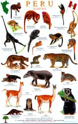 Peru Mammals Guide