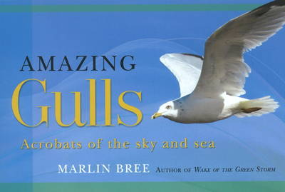 Amazing Gulls: Acrobats of the Sky and Sea (Paperback)