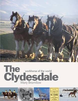 The Clydesdale: Workhorse of the World (Hardback)
