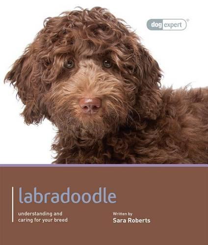 Labradoodle - Dog Expert (Paperback)