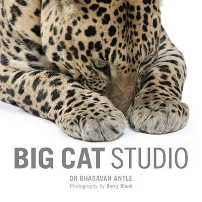 Big Cat Studio (Paperback)