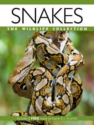Snakes - Wildlife Collection (Paperback)