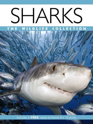 Sharks - Wildlife Collection (Paperback)