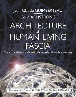 Architecture of Human Living Fascia: The Extracellular Matrix and Cells Revealed Through Endoscopy