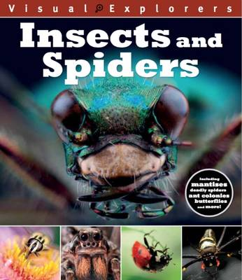 Insects and Spider - Visual Explorers 7 (Paperback)
