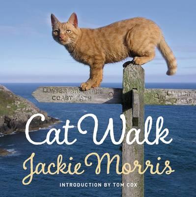Cat Walk (Hardback)