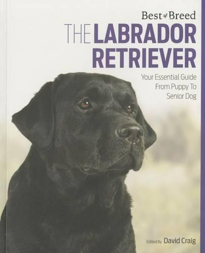 Labrador Retriever Best of Breed - Best of Breed (Paperback)