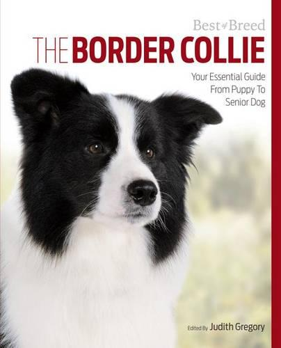Border Collie Best of Breed (Paperback)