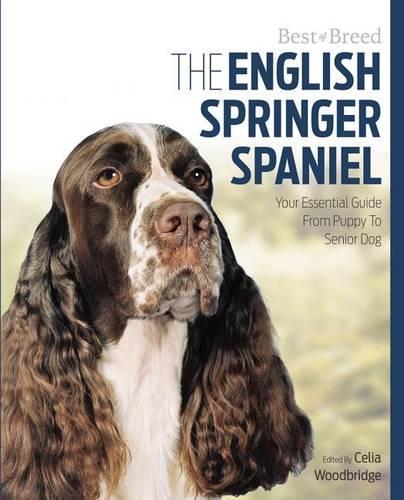 English Springer Spaniel Best of Breed (Paperback)