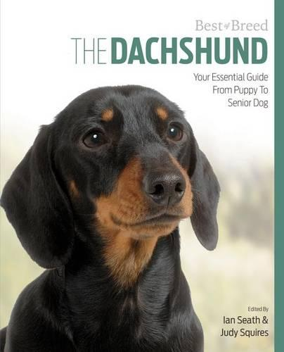 Dachshund Best of Breed (Paperback)