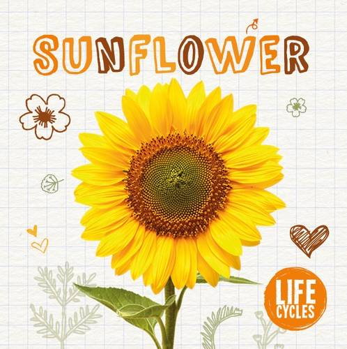Life Cycle of a Sunflower - Life Cycles 4 (Hardback)