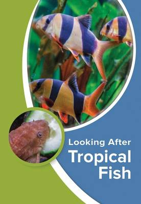 Looking After Tropical Fish (Paperback)