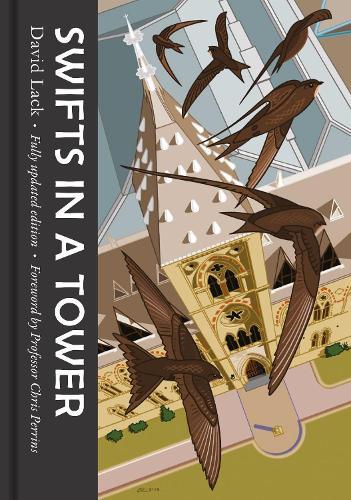 Swifts in a Tower (Hardback)