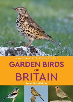 A Naturalist's Guide to the Garden Birds of Britain (2nd edition) - Naturalist's Guide (Paperback)