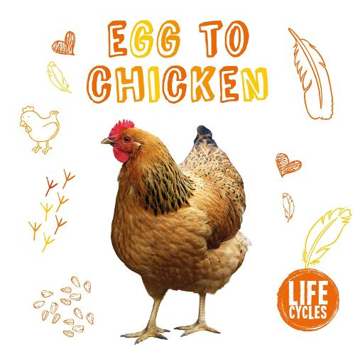 Chicken - Life Cycles (Paperback)