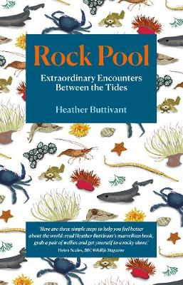 Rock Pool: Extraordinary Encounters Between the Tides: A Life -Long Fascination told in Twenty-Four Creatures (Paperback)