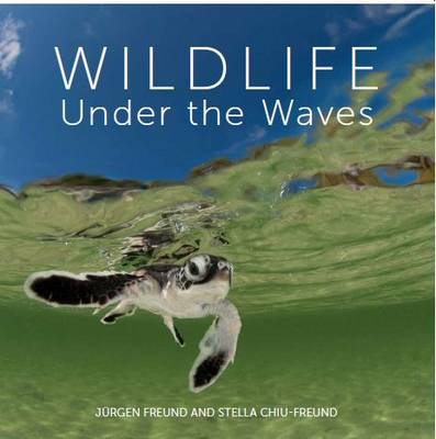 Wildlife Under the Waves (Hardback)