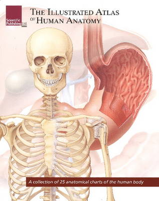 Illustrated Atlas of Human Anatomy: A Collection of 25 Anatomical Charts of the Human Body (Paperback)