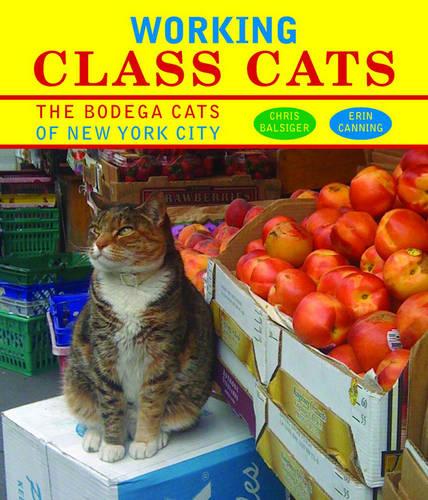 Working Class Cats: The Bodega Cats of New York City (Hardback)