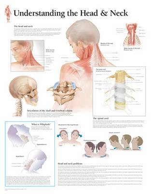 Understanding the Head & Neck Paper Poster (Poster)