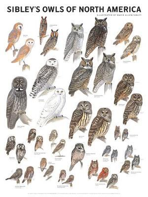 Sibley's Owls of North America (Poster)