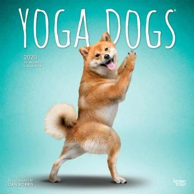 Yoga Dogs 2020 Square Wall Calendar (Calendar)